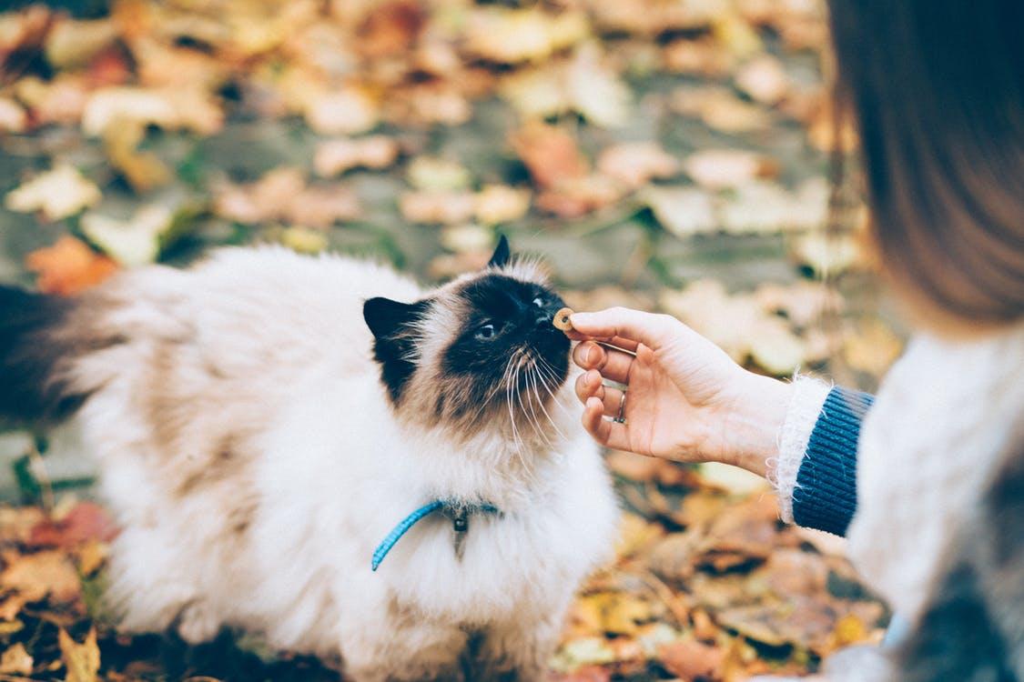 kattenmens