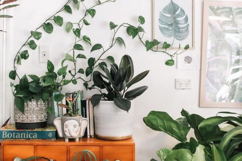 planten schadelijke stoffen
