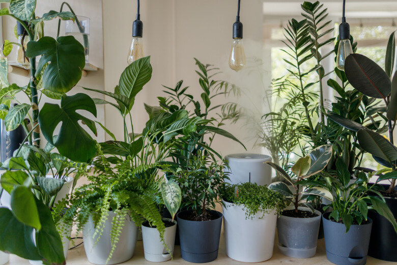 Plant-verzorgen